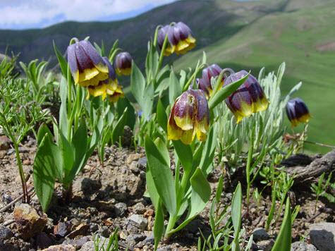 Flora Of Turkey